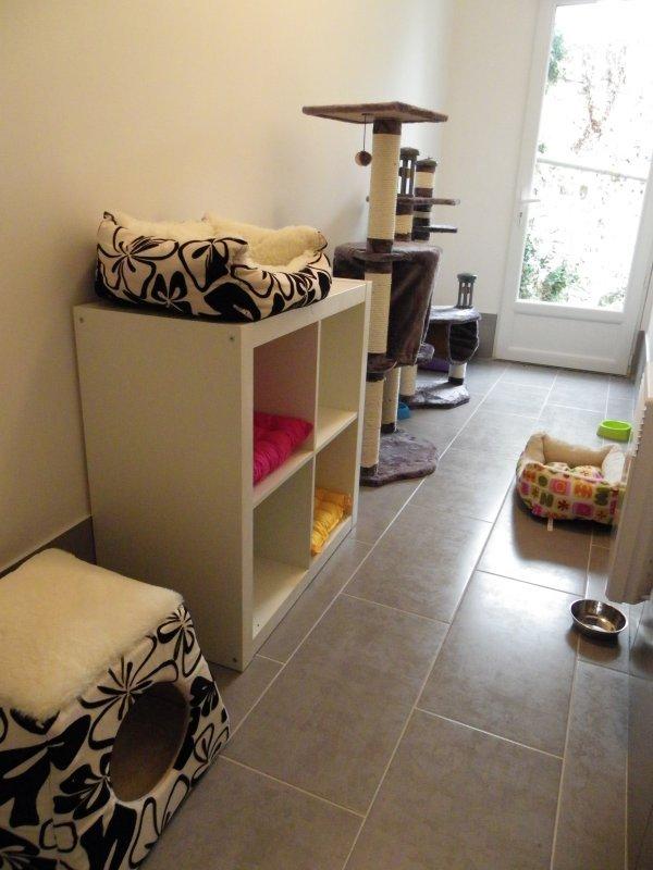 showtime2 la pension des 3 chats pension pour chats dans le 77 ile de france paris. Black Bedroom Furniture Sets. Home Design Ideas