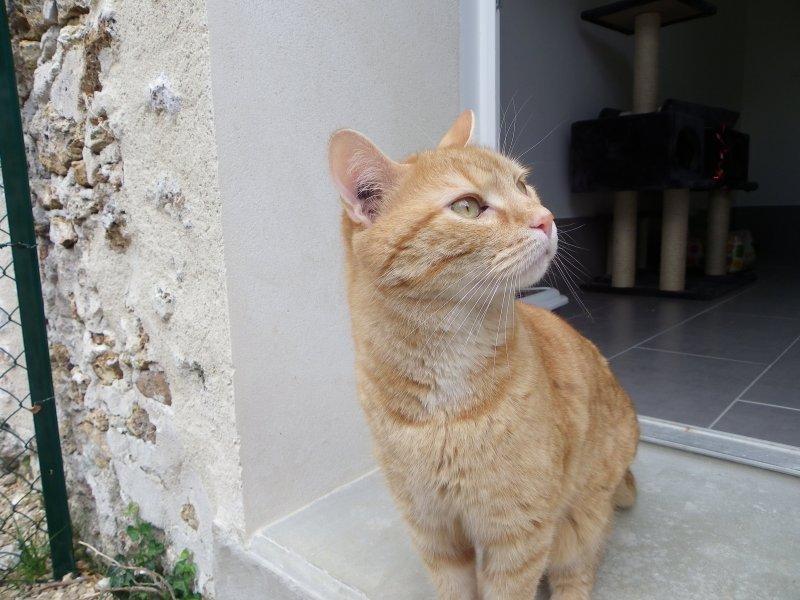 showtime3 la pension des 3 chats pension pour chats dans le 77 ile de france paris. Black Bedroom Furniture Sets. Home Design Ideas