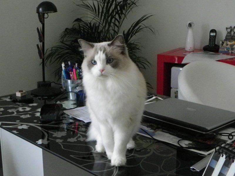 showtimes4 la pension des 3 chats pension pour chats dans le 77 ile de france paris. Black Bedroom Furniture Sets. Home Design Ideas