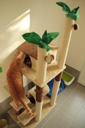 garde chat la pension des 3 chats pension pour chats dans le 77 ile de france paris. Black Bedroom Furniture Sets. Home Design Ideas