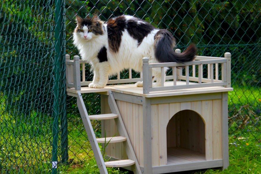 les maisons de chat ventana blog. Black Bedroom Furniture Sets. Home Design Ideas